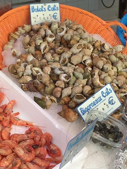brown seashell lot photo