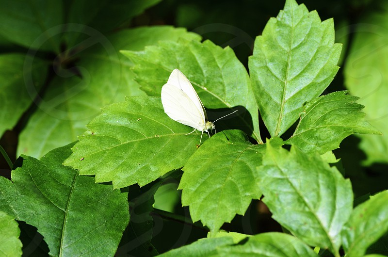 green leafs  photo