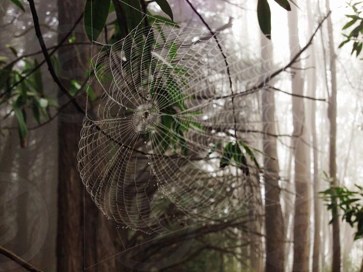 spider web house macro photography photo
