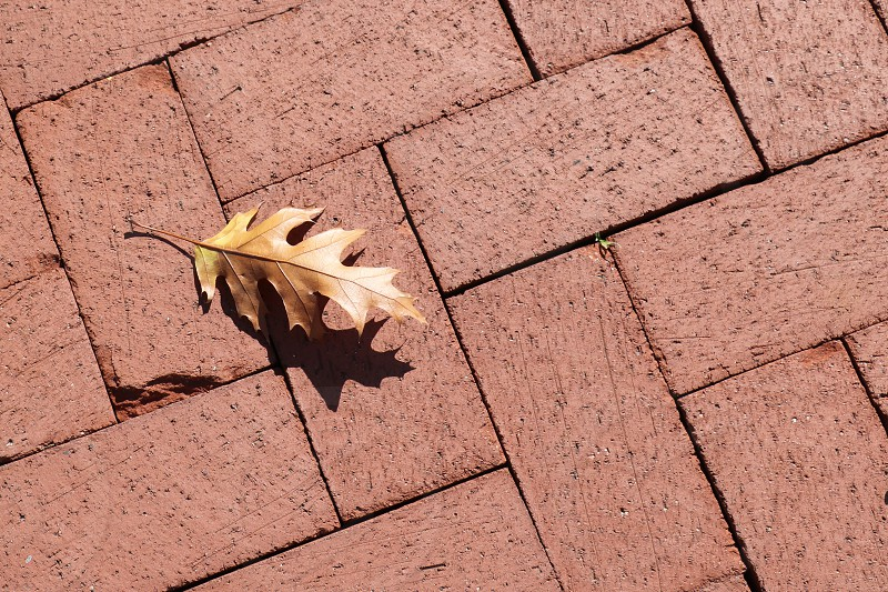 Aerial perspective and view of a single fall leaf on a brick pathway photo
