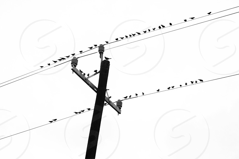 silhouette photography of flock of birds perched on electric cable during daytime photo