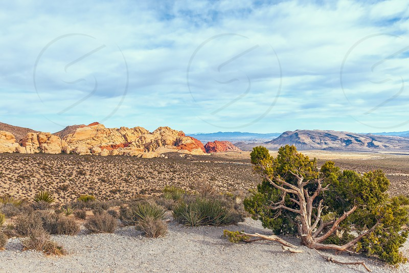 View from High Point Overlook. Red Rock Canyon National Conservation Area. Nevada. USA photo