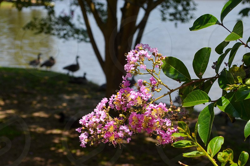 Flowers by the lake.  photo