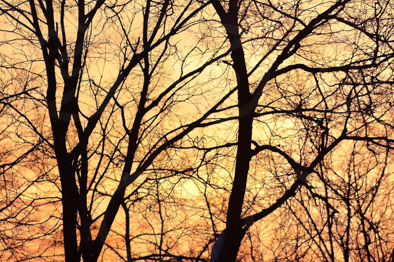 silhuetted trees and tree's branches in deep bright sunset orange light photo