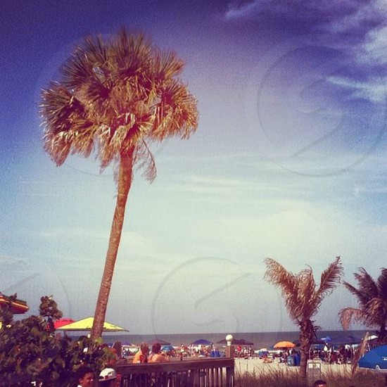 sunny beach in Orlando FL photo