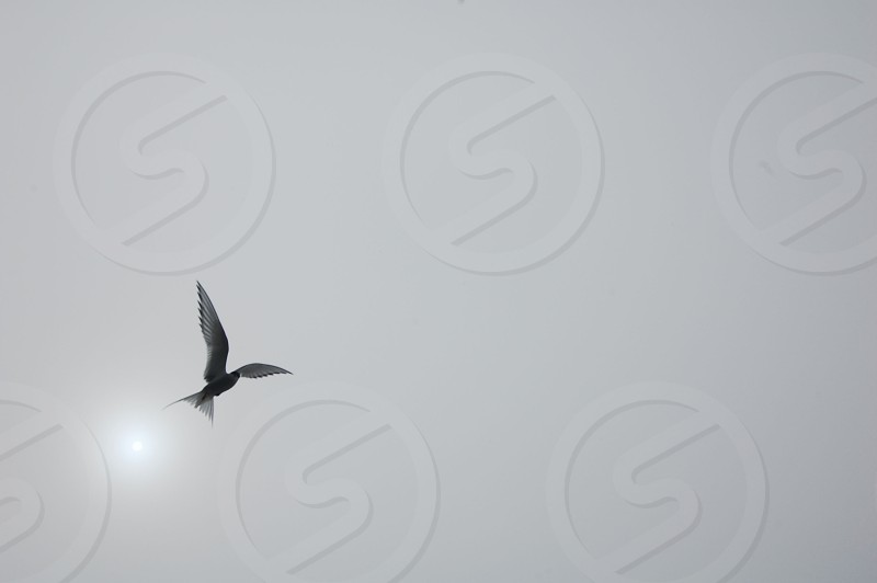 black and white bird flying panoramic photography photo