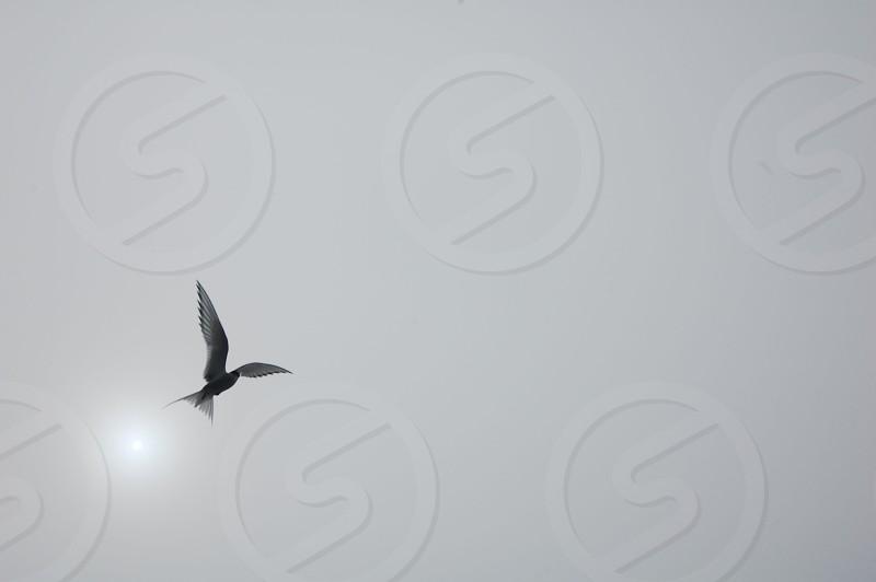 black and white bird flying panoramic photography photo