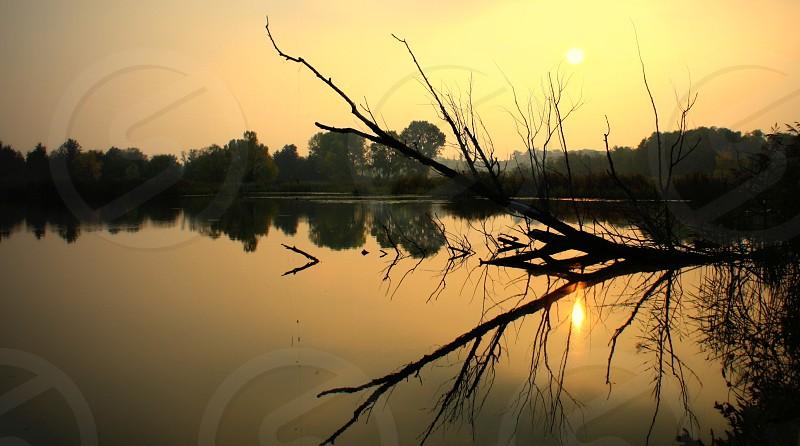 reflection lake water trees sunset light nature natural light  photo
