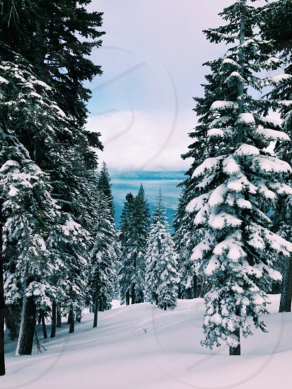 Lake Tahoe winter. Snow-covered trees photo
