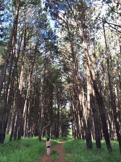 person under tall trees photo photo