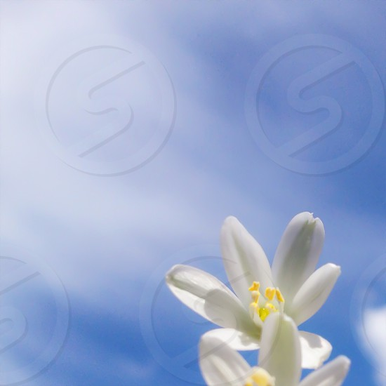white flower under cirrus clouds macro photography photo