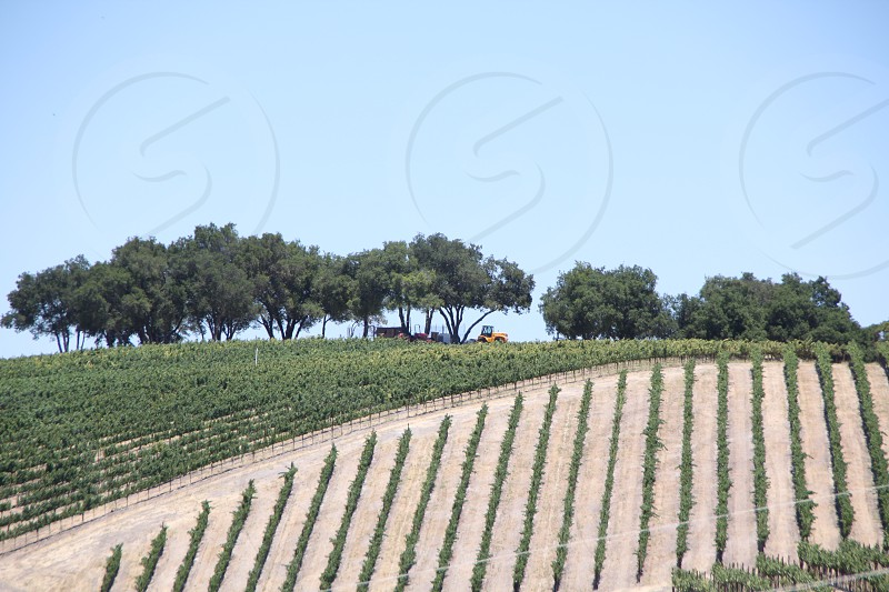 Vineyards in Paso Robles CA photo