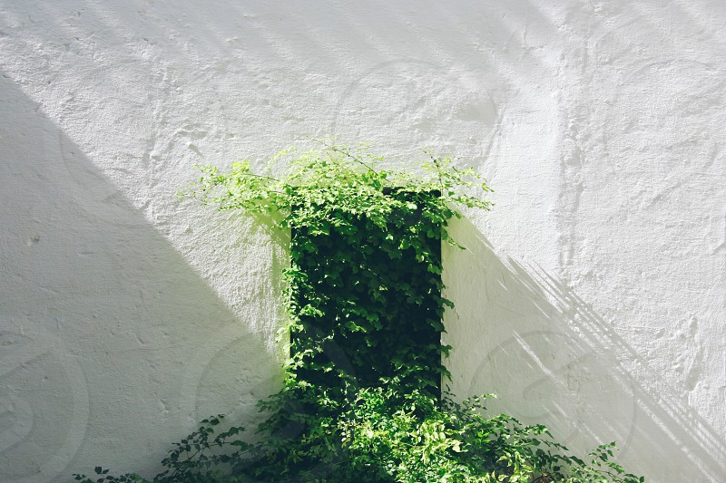 Plant invading a window against white wall photo