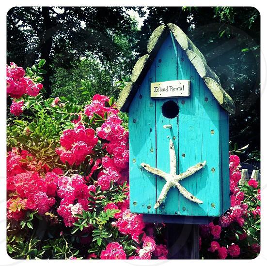 blue bird house photo