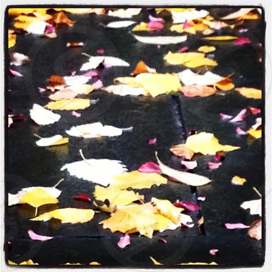 brown falling leaves photo