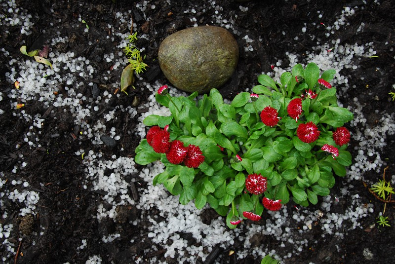 spring red plant hale stone photo