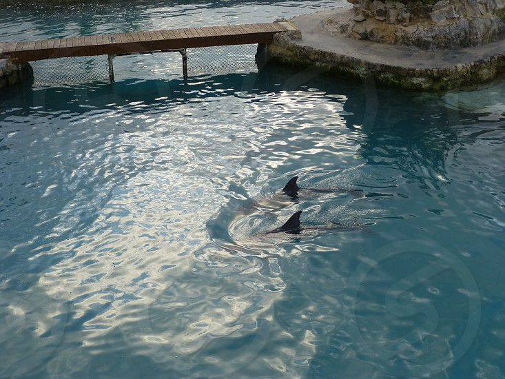 Dolphinaris Cozumel photo