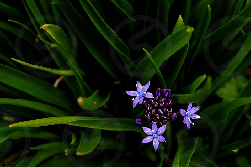 blue samll sized flower photo