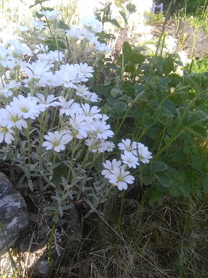 flower plant photo