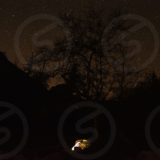 silhouette tree with lighted tent under starry night photo