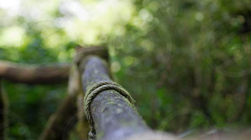 close up photography of a brown wooden fence photo