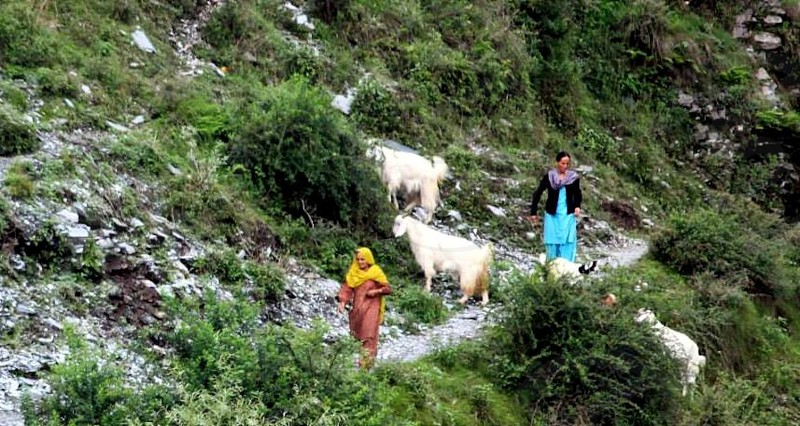 mountain road with goats and woman wearing yellow head scarf and woman wearing blue tunic photo