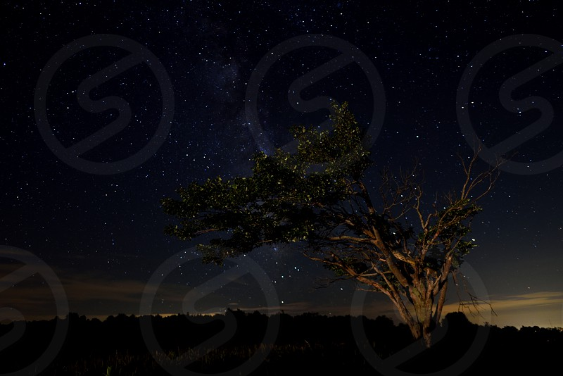 The Milky Way is visible over a lone tree at Big Meadows in Shenandoah National Park VA. photo