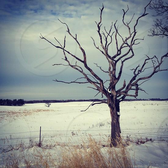 The dead of #winter. #snow photo
