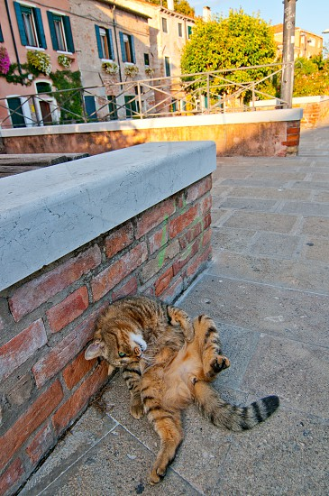 Venice Italy wild cat relaxing on the street photo