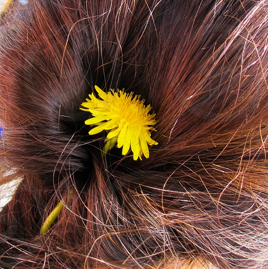 Dandelion tucked into a loose braid with sunlight catching the strands of brunette hair photo