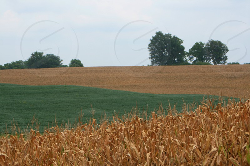 Field view countryside corn fall September trees sky field rural midwest photo