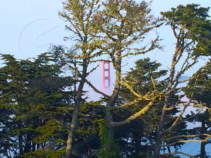photo of trees and san francisco golden bridge photo