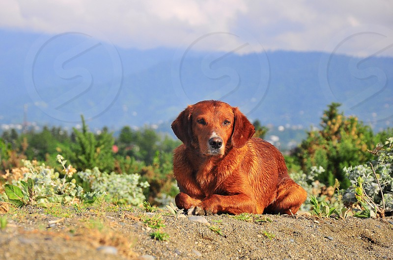 brown dog on flower meadow photo