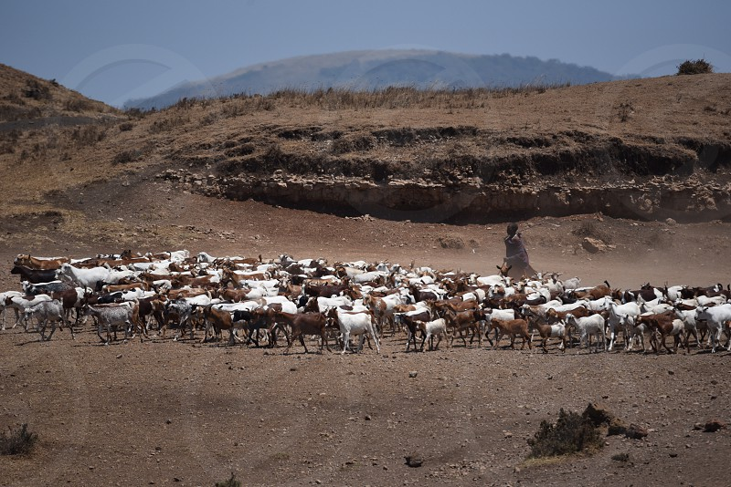 Africa Tanzania herding  photo