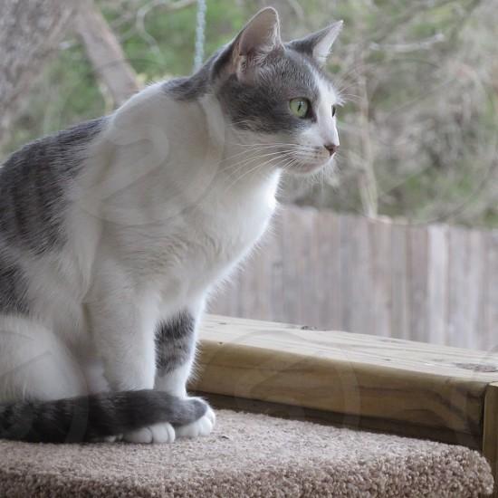 Cat watching photo