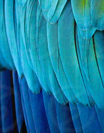 close up photo of teal macaw feathers photo