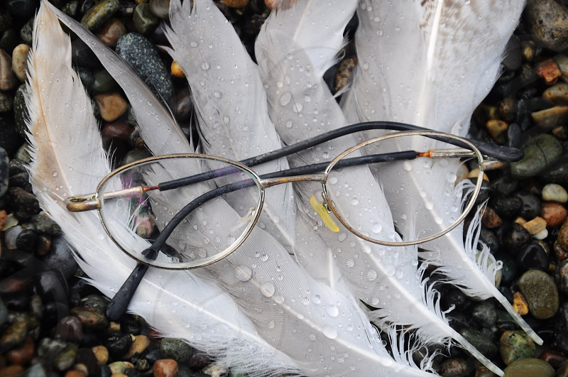 silver rimmed eyeglasses on white feathers photo