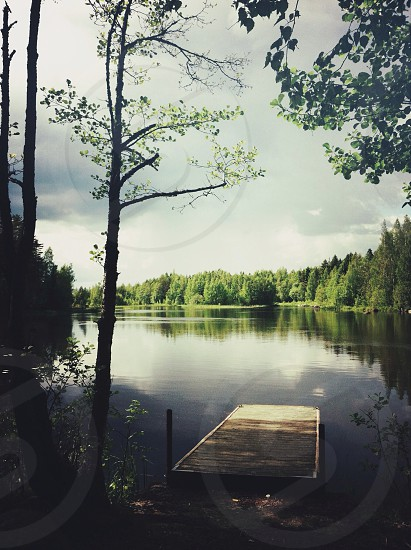 brown and black wood on river photo