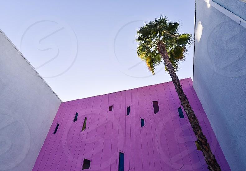 purple design architecture palm tree palm springs california modern photo