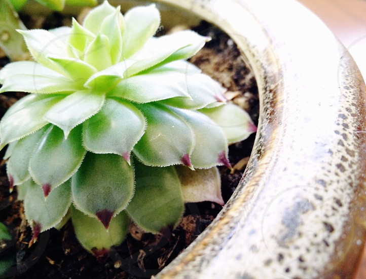 close up photo of green succulent plant photo