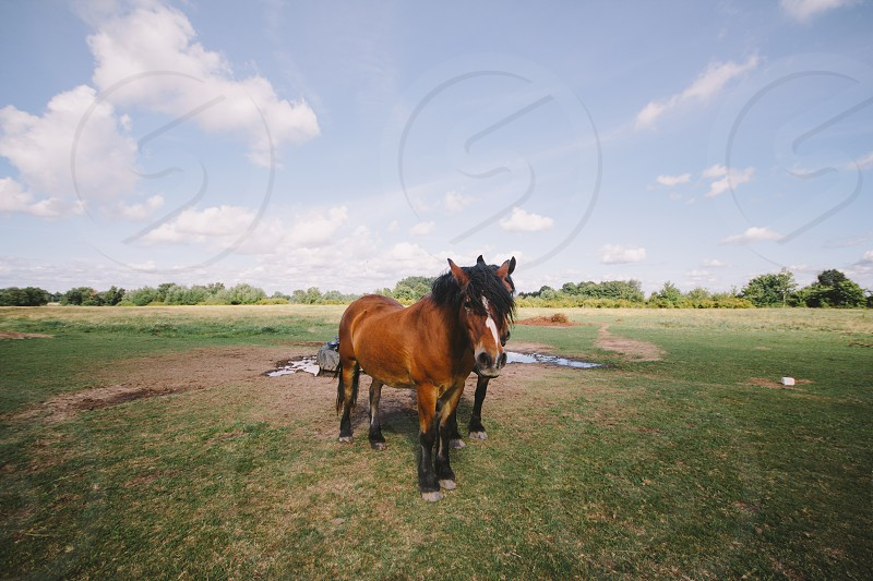 brown horse on the grass land photo