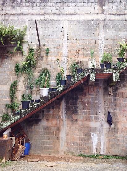 Green favela staircase.  photo
