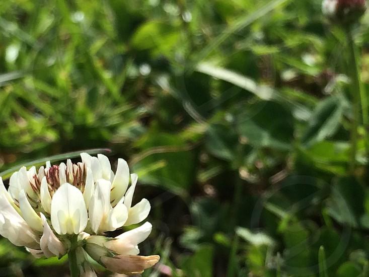 Hawaii maui flower nature plants photo