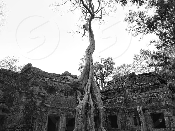 Ta Prohm. Cambodia photo