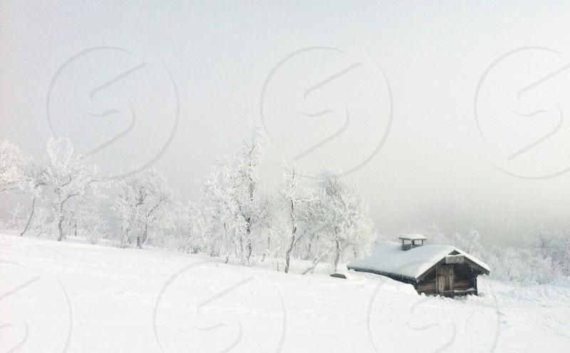 white snow tree house photo