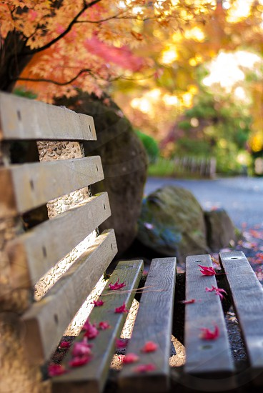 Bench in colorful fall park photo