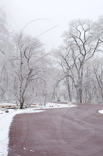 snow covered trees road photo