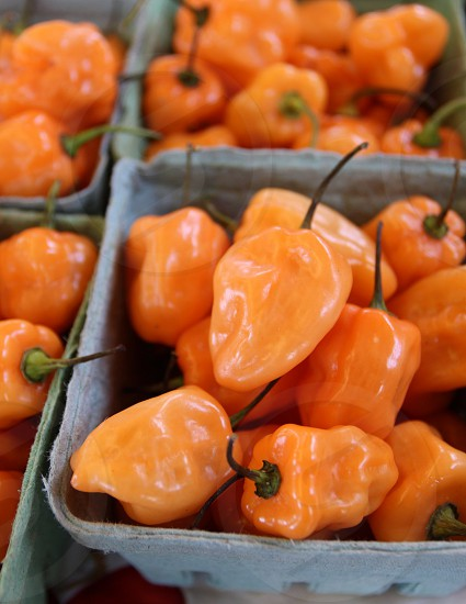 Cartons of small orange peppers at farmers market photo
