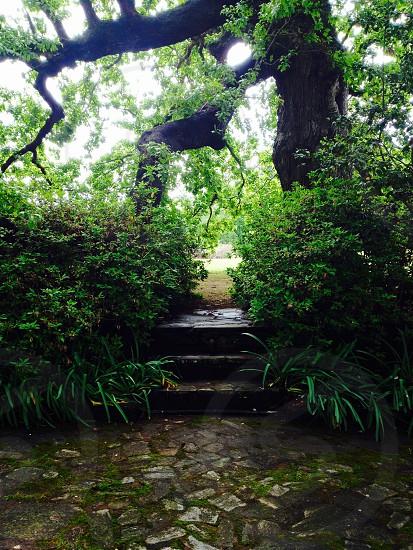 Jasmine Hill Gardens Alabama photo