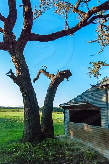 tree barn farm oak photo
